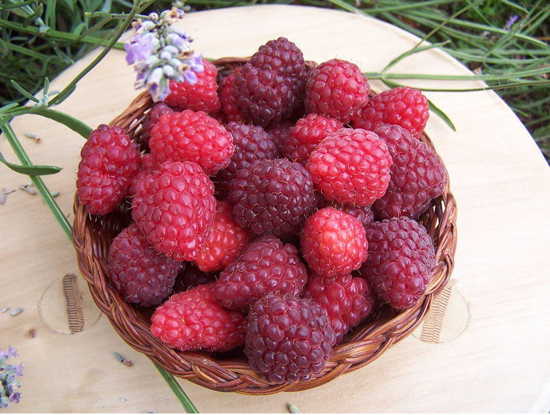 Image of a bowl of freshly picked garden raspberries